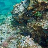 Recife colorido e mar azul esverdeado Fotos de Stock