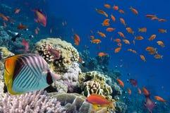 Recife com uma variedade de corais duros e macios Fotos de Stock Royalty Free