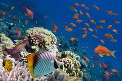 Recife com uma variedade de corais duros e macios Fotos de Stock