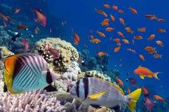 Recife com uma variedade de corais duros e macios Fotografia de Stock