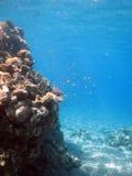 Recife coral Fotografia de Stock Royalty Free