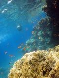 Recife coral Foto de Stock Royalty Free