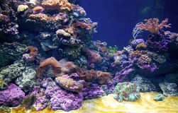 Recife coral imagem de stock royalty free