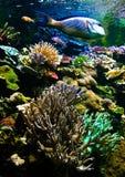 Recife coral Imagens de Stock