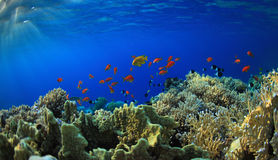Recife coral Imagem de Stock