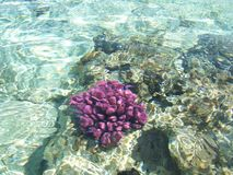 Recife coral 4 Imagem de Stock Royalty Free