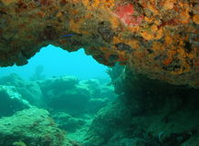 Recife coral Fotos de Stock