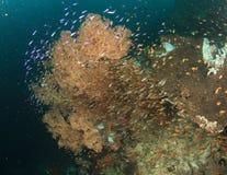 Recife coral colorido imagens de stock