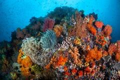 Recife coral colorido Fotos de Stock Royalty Free