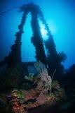 Recife coral colorido com peixes exóticos Fotos de Stock