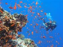 Recife coral da água pouco profunda do mergulhador Fotografia de Stock