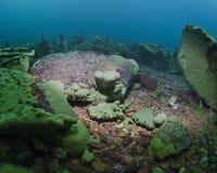 Recife coral de Baikal Imagem de Stock