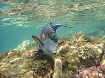 Recife coral e coralfishes Imagem de Stock