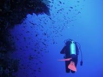 Recife coral e mergulhador Foto de Stock Royalty Free