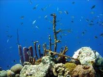 Recife coral e peixes Imagem de Stock Royalty Free