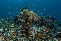 Recife coral e peixes coloridos Imagem de Stock Royalty Free