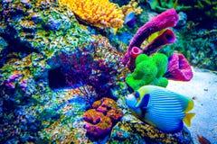 Recife coral e peixes tropicais Fotos de Stock Royalty Free