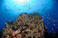 Recife coral e sol foto de stock royalty free