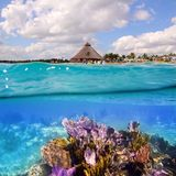 Recife coral em Riviera maia Cancun México Foto de Stock