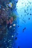 Recife coral indonésio Fotografia de Stock Royalty Free