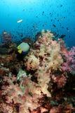 Recife coral macio foto de stock royalty free