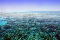Recife coral. Mar Vermelho. Egipto. Fotografia de Stock