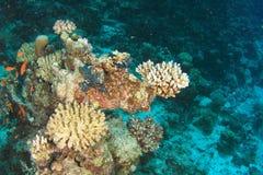 Recife coral no Mar Vermelho fotos de stock royalty free