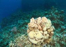 Recife coral no Mar Vermelho imagem de stock