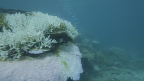 Recife coral subaquático filme