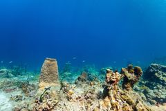 Recife coral subaquático fotografia de stock