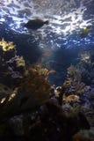 Recife coral subaquático imagens de stock