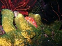 Recife coral subaquático Imagem de Stock Royalty Free