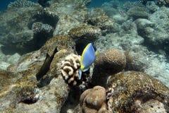 Recife coral tropical foto de stock royalty free