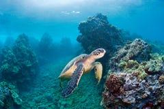 Recife da tartaruga de mar Imagens de Stock