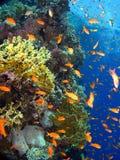 Recife de corais Imagens de Stock Royalty Free