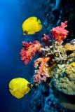 Recife de corais Fotos de Stock Royalty Free