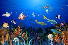 Recife de corais Imagens de Stock
