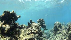 Recife de corais vídeos de arquivo