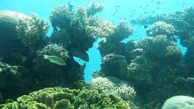 Recife de corais video estoque