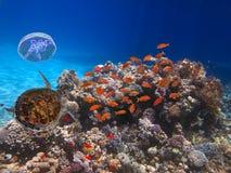 Recife de corais colorido com muitos peixes Fotos de Stock