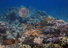 Recife de corais colorido com muitos peixes e tartaruga de mar Imagem de Stock