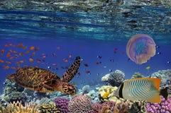 Recife de corais colorido com muitos peixes e tartaruga de mar Fotografia de Stock Royalty Free
