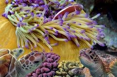 Recife de corais colorido com muitos peixes e tartaruga de mar Imagens de Stock Royalty Free
