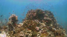 Recife de corais com abundância dos peixes 4K vídeos de arquivo