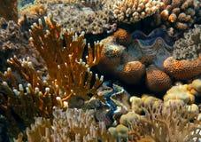 Recife de corais com corais do fogo no mar tropical Fotos de Stock