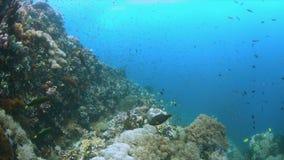 Recife de corais com peixes 4k da abundância filme