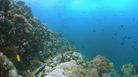 Recife de corais com peixes 4k da abundância video estoque