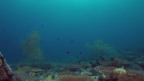 Recife de corais com peixes 4k da abundância vídeos de arquivo