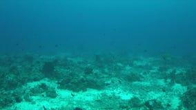 Recife de corais com um tubarão do recife de Whitetipr e uma tartaruga de Hawksbill 4K filme
