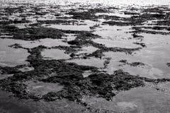 Recife de corais do mar sul de Java foto de stock